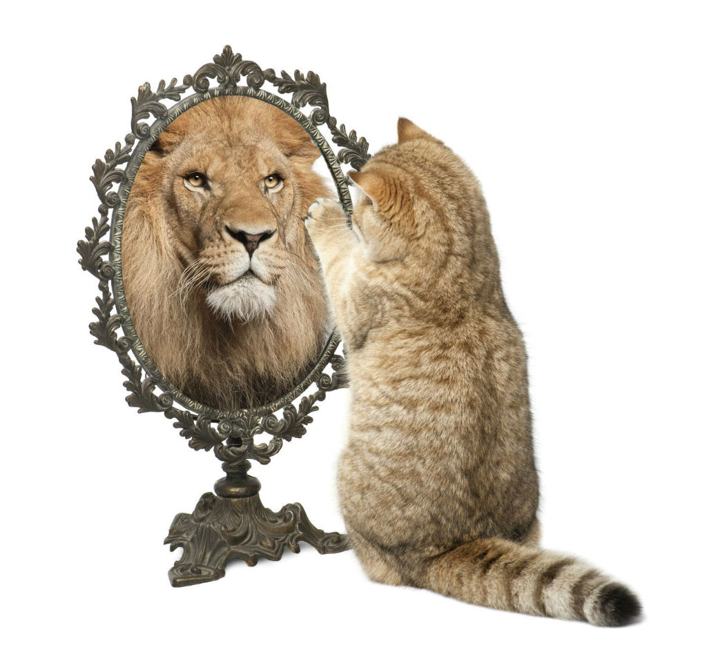 lion in the mirror