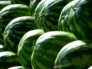 Green Melons Water Melons Watermelon Fruit